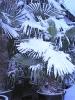 winterliche Impressionen_11