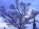 winterliche Impressionen_2