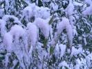 winterliche Impressionen_3