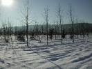 winterliche Impressionen_4