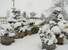 winterliche Impressionen_5